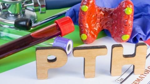 Il PTH svolge un ruolo chiave nella regolazione dell'omeostasi calcica